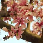 bless your body magnolias philadelphia