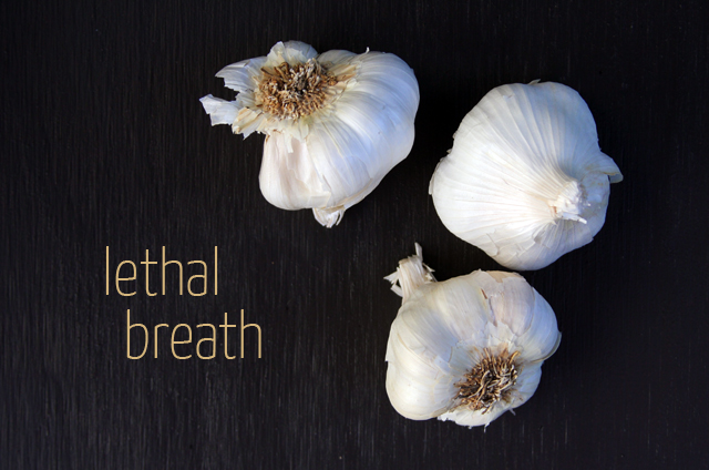 garlic allium sativum herb of the month