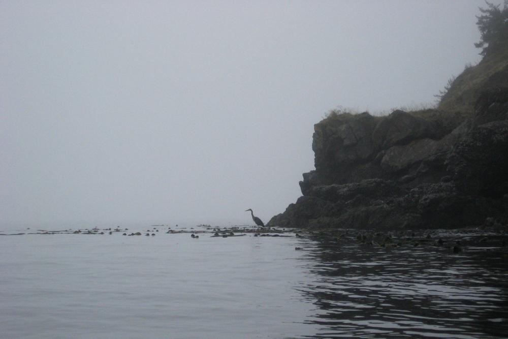 bird over foggy ocean