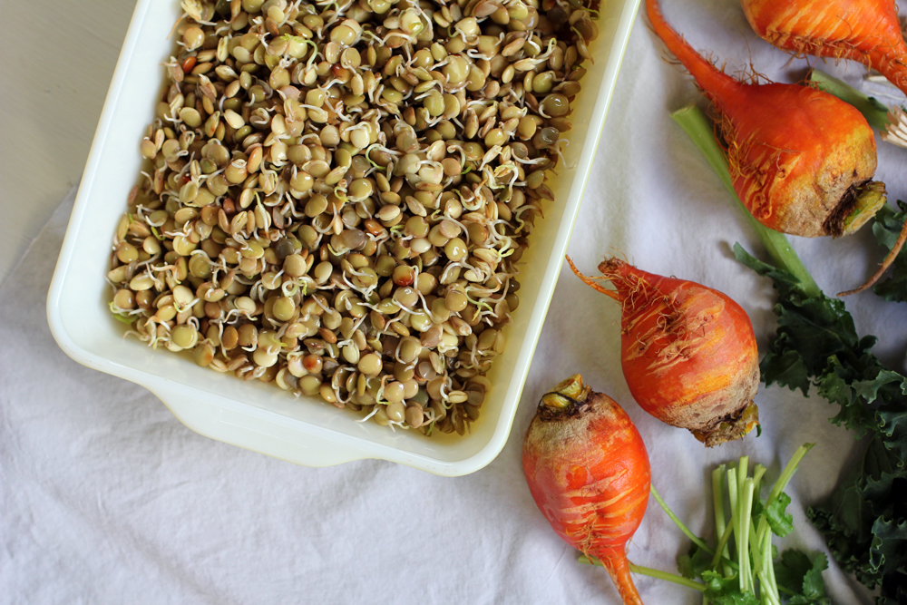 Sprouted Lentil & Yellow Beet Salad
