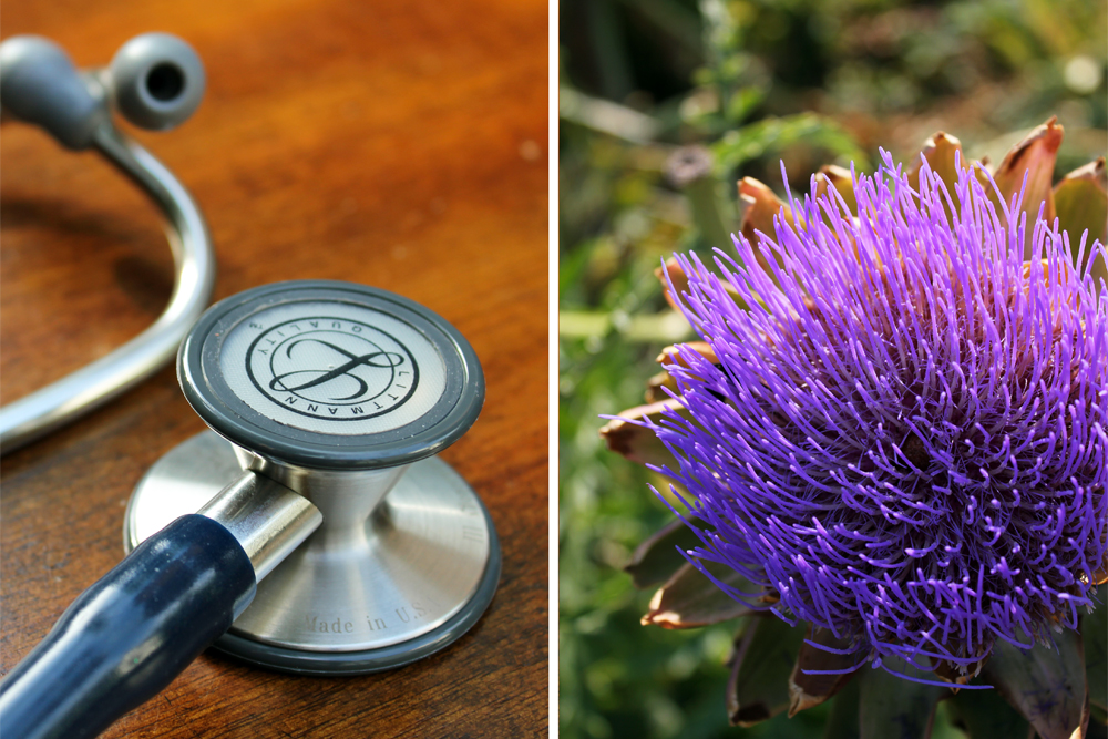 what is an nd stethoscope artichoke herb